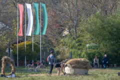 Balatonfelvidéki-őszi-túra-271