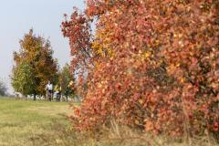 Balatonfelvidéki-őszi-túra-371