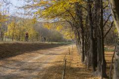 Balatonfelvidéki-őszi-túra-387